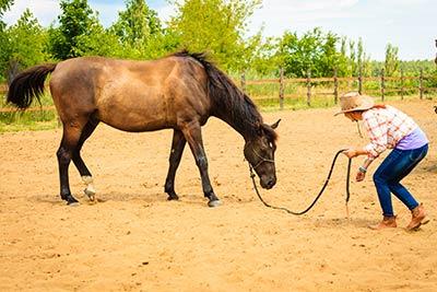 Fernstudium Horsemanship – Bodenarbeit mit dem Pferd
