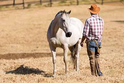 Pferdegestütztes Coaching / Training